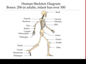 The Human Organism Introduction to Human Body Systems