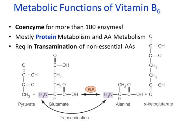 Water-Soluble Vitamins - ppt video online download