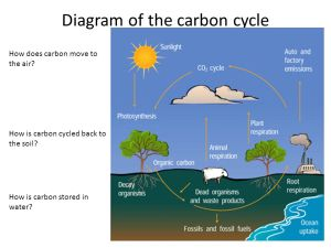 Ecological Organization and Matter Cycles  ppt video