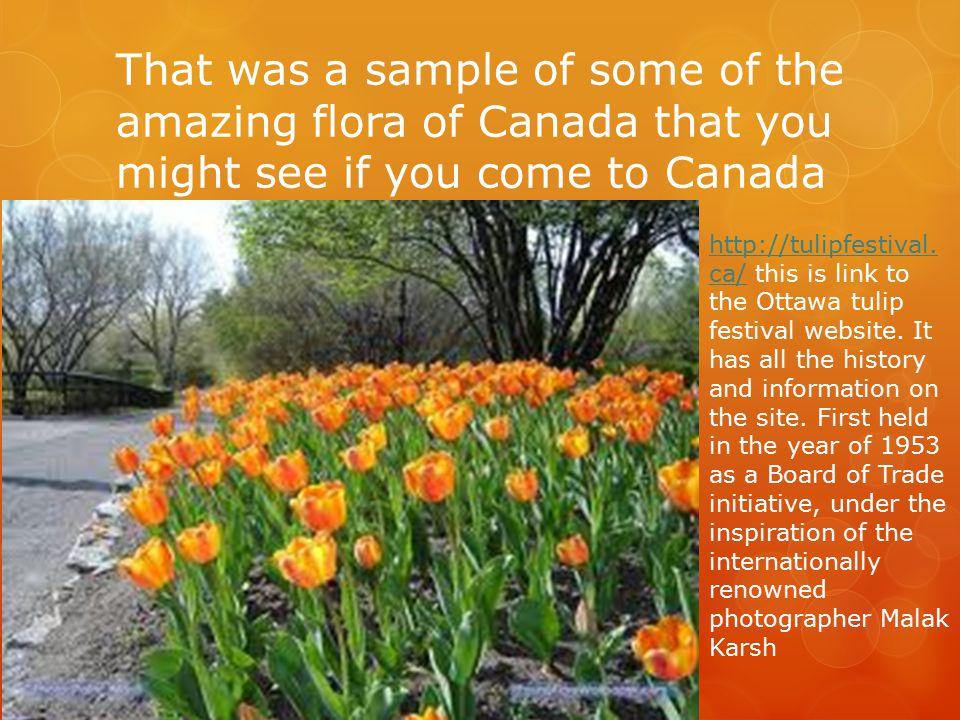 Canada Flora Ppt Download
