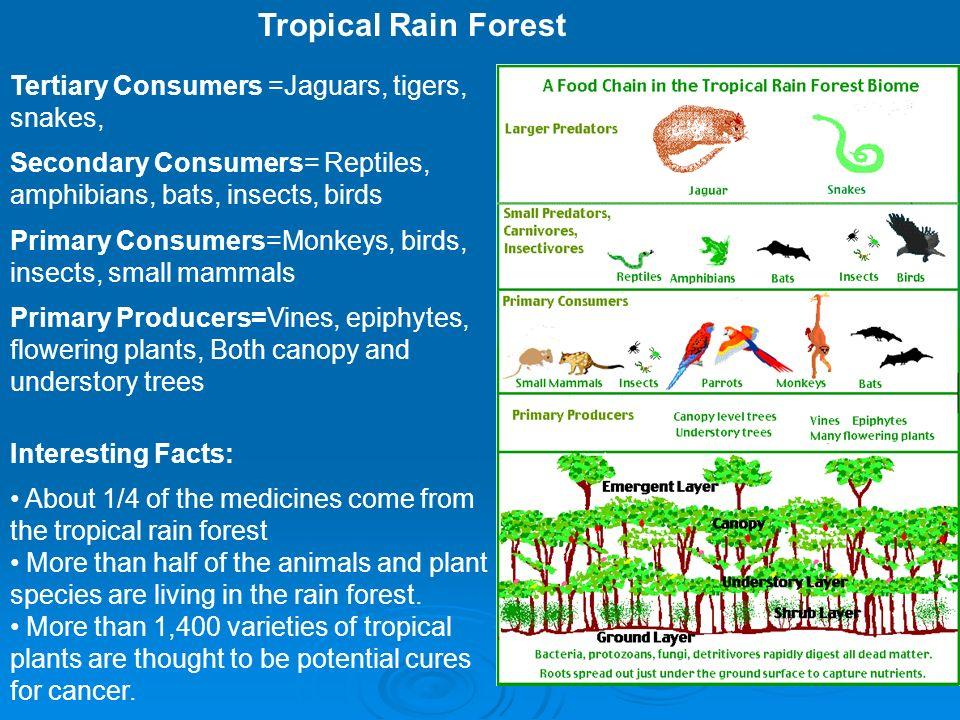 Animals Uncommon Rainforest Tropical