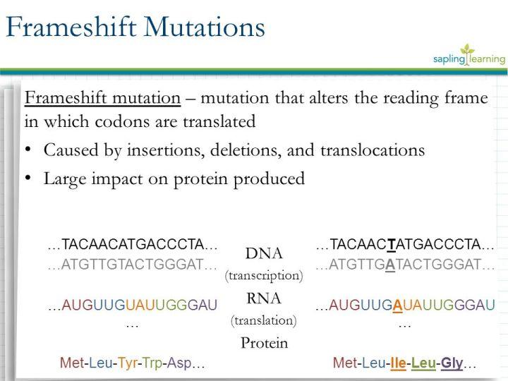 Frameshift Mutation Meaning Biology | Frameswall.co