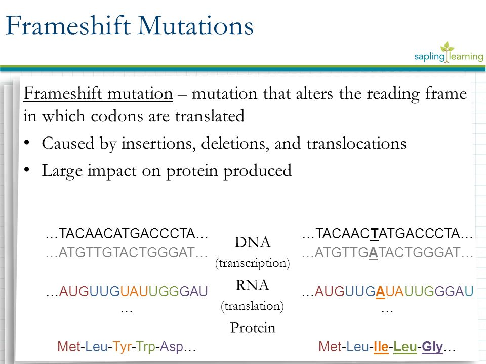 Reading Frame And Frameshift Mutation Difference | Siteframes.co