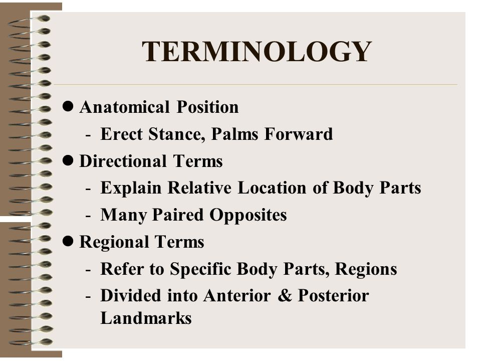 Anatomical Regional Terms