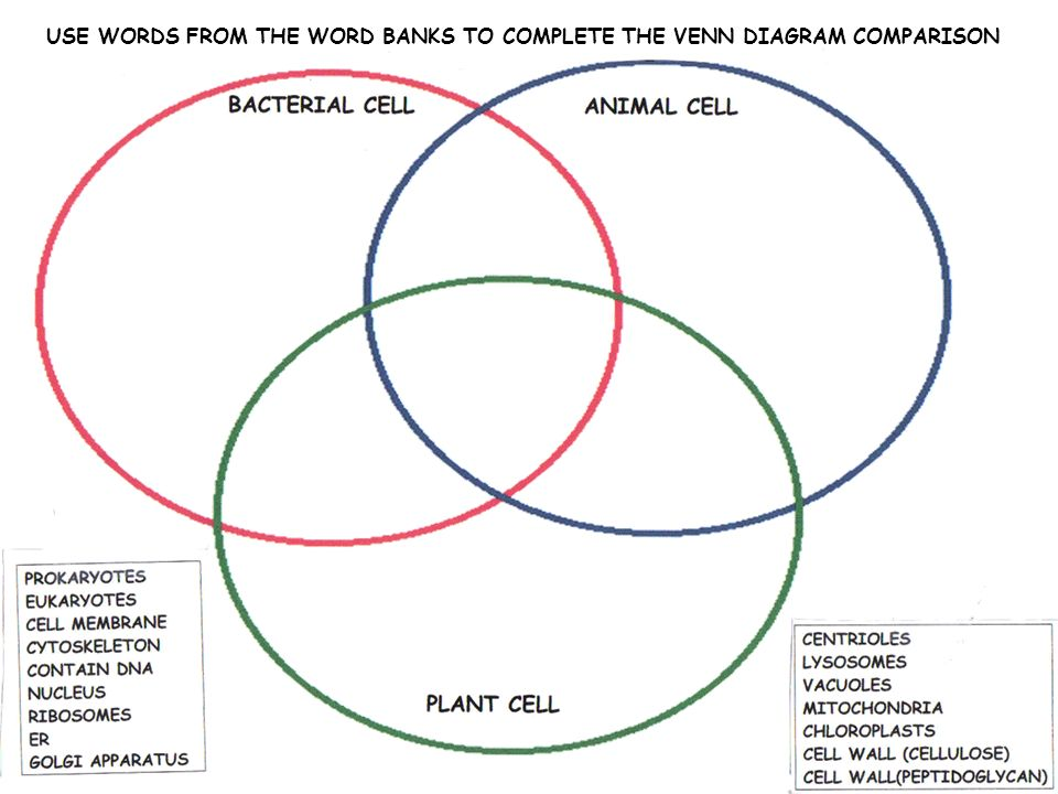 Organelles Of Plant And Animal Cells Venn Diagram