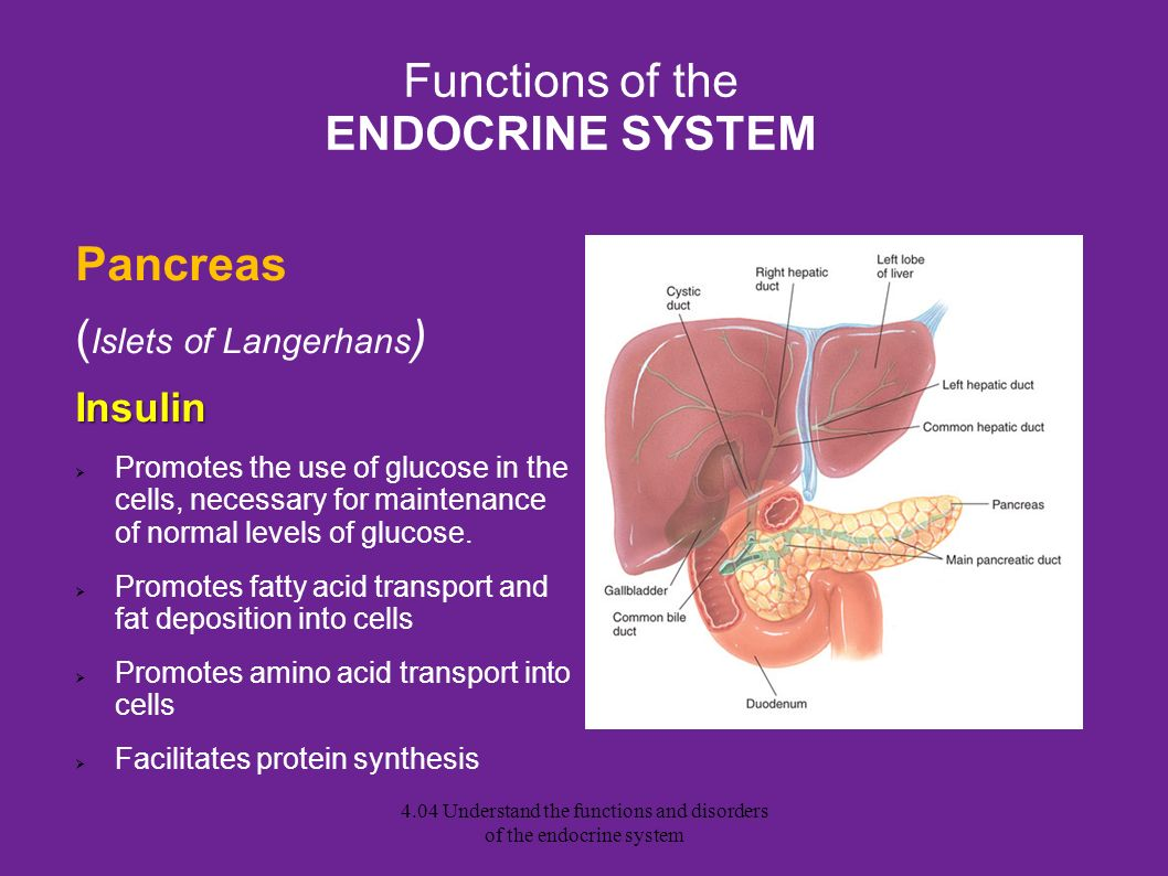 4 04 Understand The Functions And Disorders Of The Endocrine System