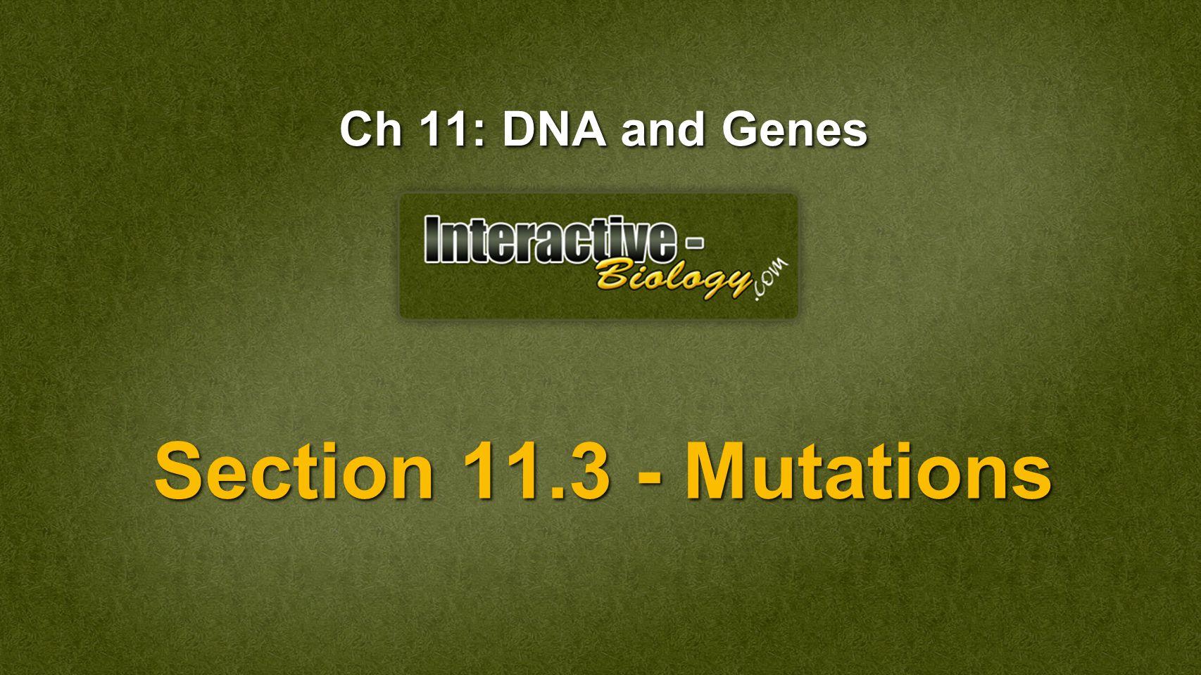 Worksheet Chapter 11 Dna And Genes Worksheet Answers Worksheet Fun Worksheet Study Site
