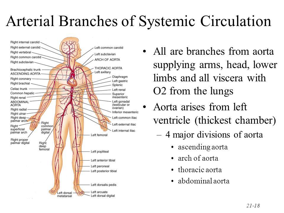 Lower Extremity Arterial Anatomy