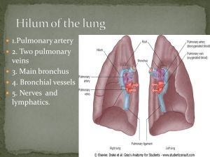 Pleura and Lungs  ppt video online download