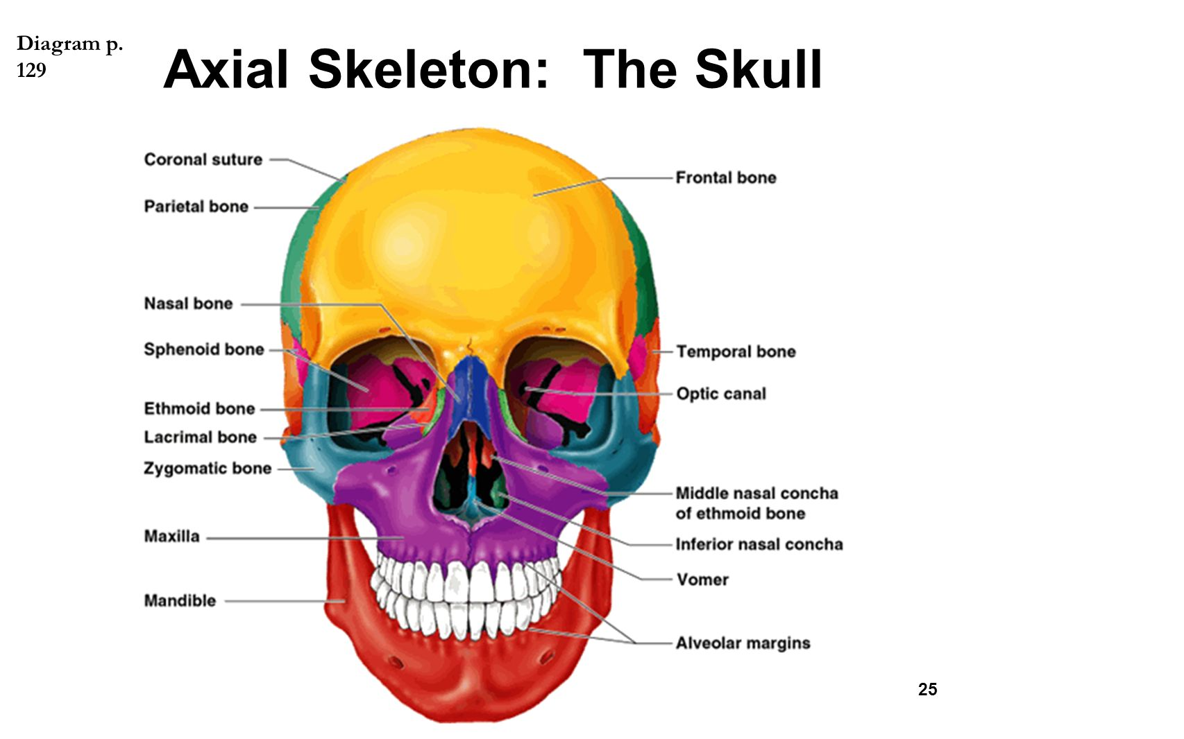 The Whole Skeleton Label Worksheet