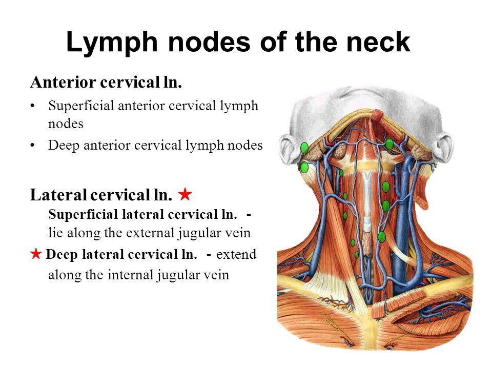 Axillary Lymph Nodes Ct