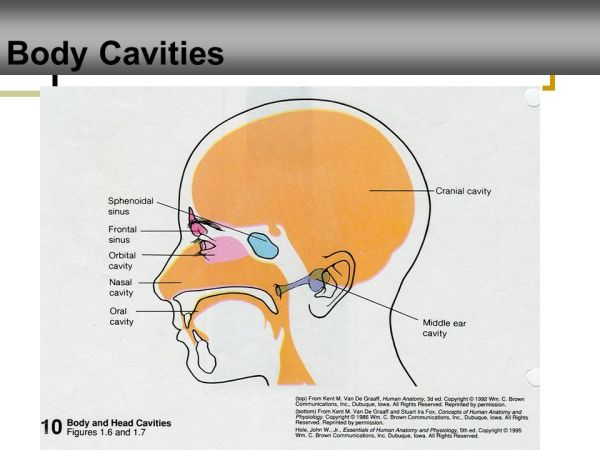 Diagram Of Nose And Sinuses Pictures and Ideas on Digi Scrappy