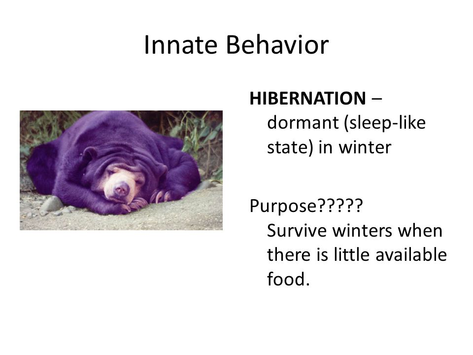 Behavior Examples Innate Animal