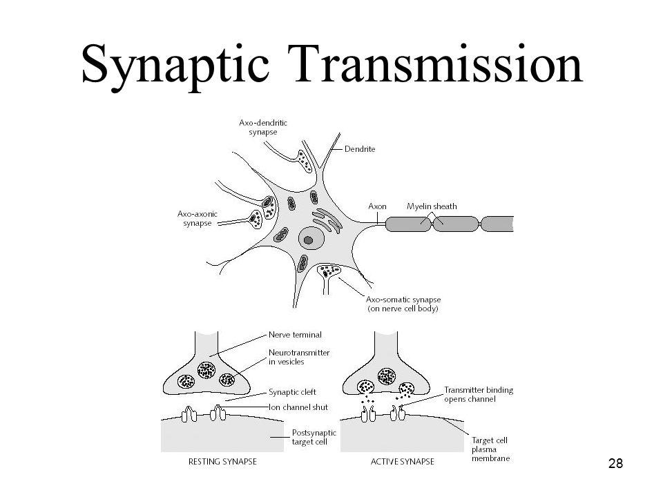Another Neuron Synapse Neuron
