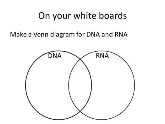 Compare and contrast dna rna venn diagram periodic diagrams science venn diagram for dna and rna do now where is the dna located in cell ppt ccuart Choice Image