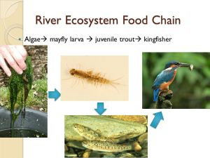 Communities & Ecosystems  ppt download