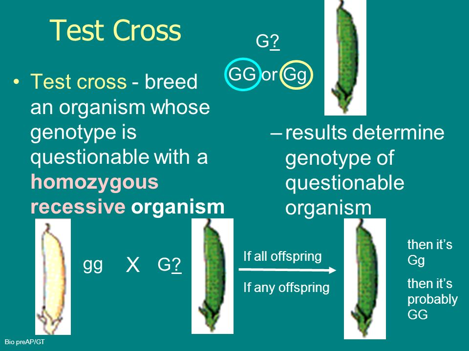 Genetic Makeup Of An Organism New The Genetic Makeup Of An Organism Such As Gg Is Its Cartooncreativeco
