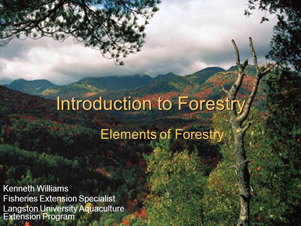 Consequences of deforestation • biodiversity: Introduction To Forestry Ppt Video Online Download
