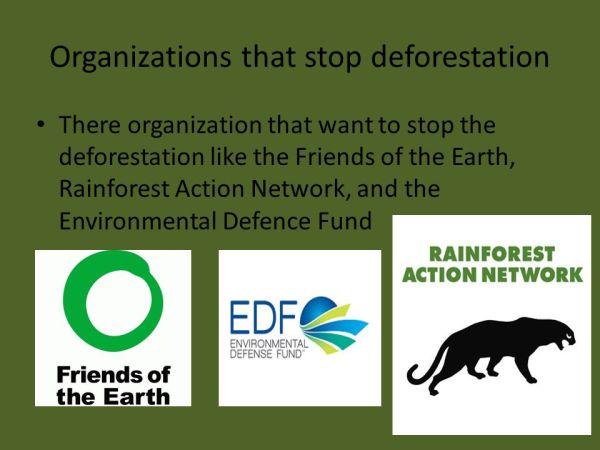 Deforestation By Mitchel Manuputty. - ppt video online ...