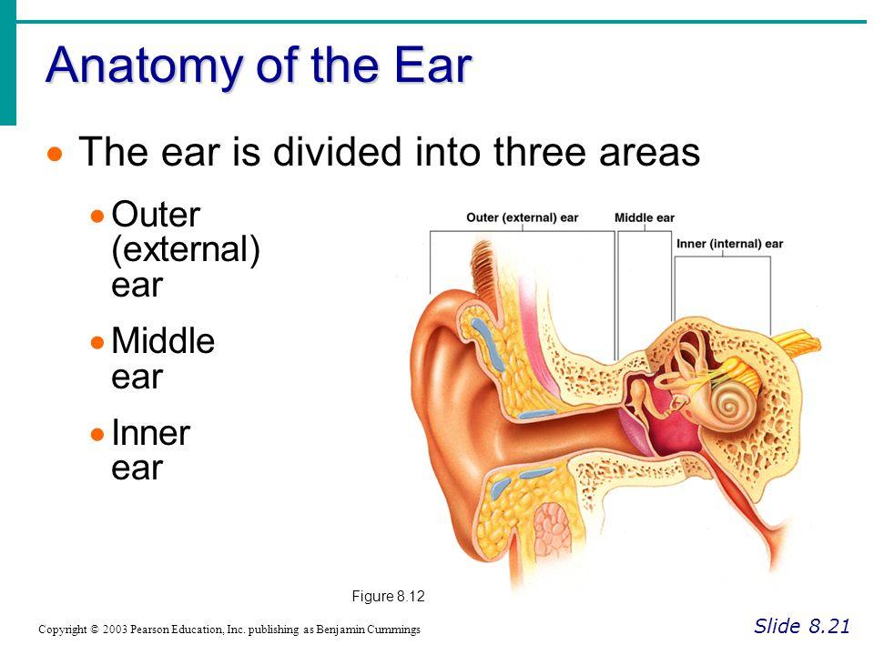 Outer Ear Anatomy Pinna