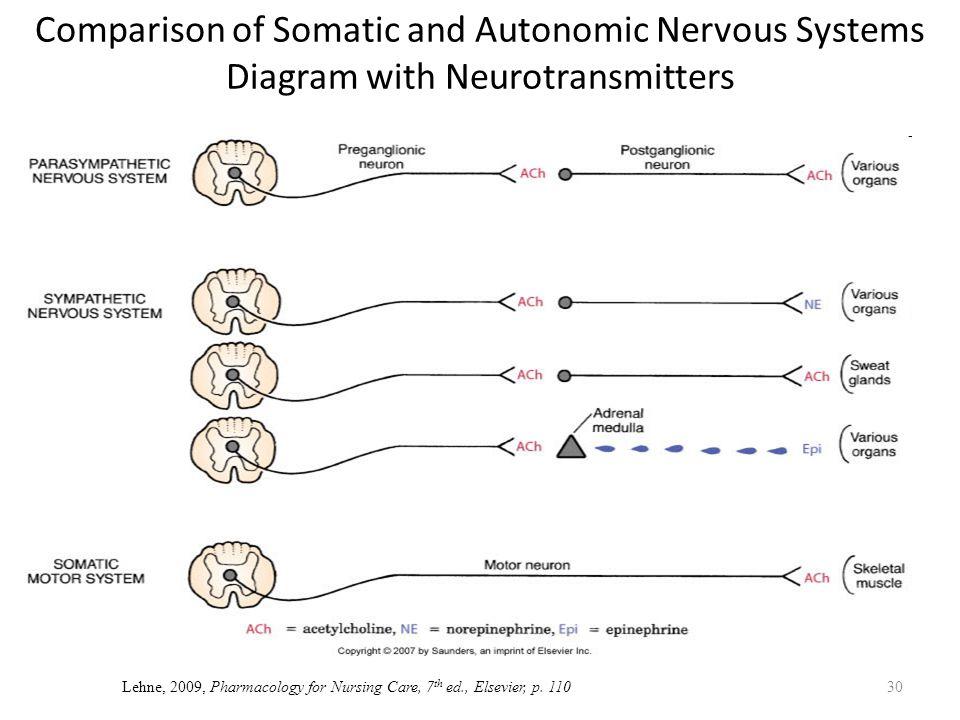 Neurotransmitters Autonomic Nervous System Diagram - DIY Enthusiasts ...