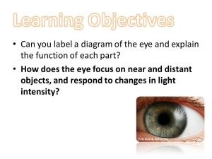 Learning Objectives Can you label a diagram of the eye and
