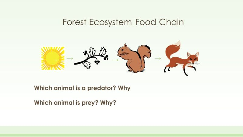Forest Ecosystem Food Web   Foodfash.co Forest Ecosystem Food Chain