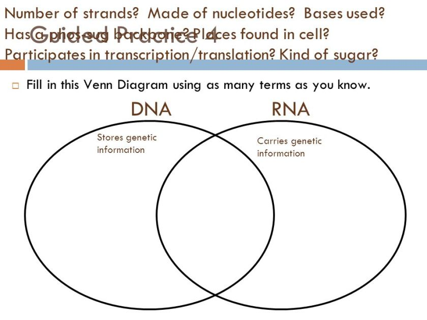 Fig 7 Dna Rna Venn Diagram Excellent Bright Large And Overview Of