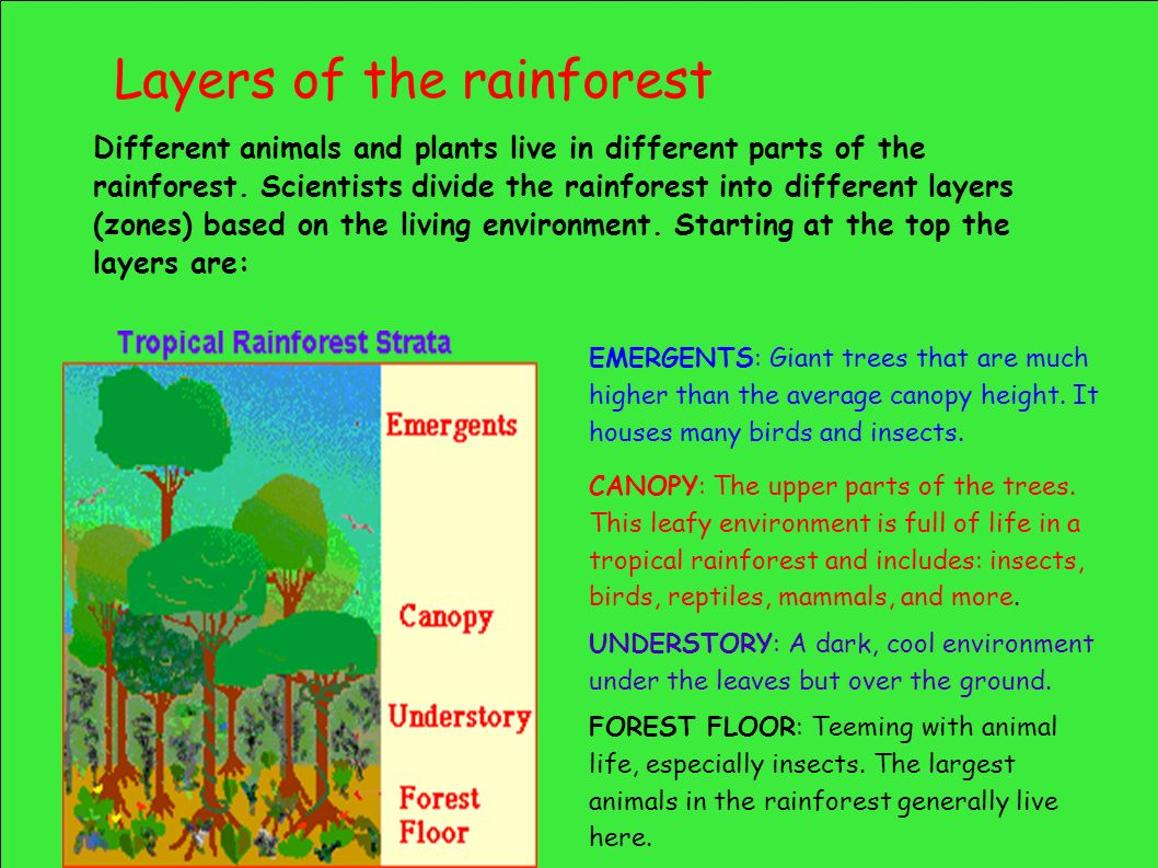 Rainforests As Habitats