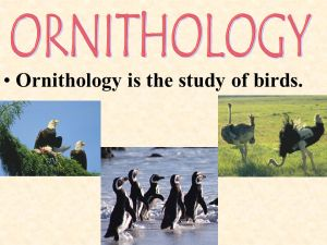 BRANCHES OF BIOLOGY  ppt video online download
