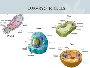 INTRODUCTION TO UNIT ONE BIOLOGY: Unity and diversity  ppt download