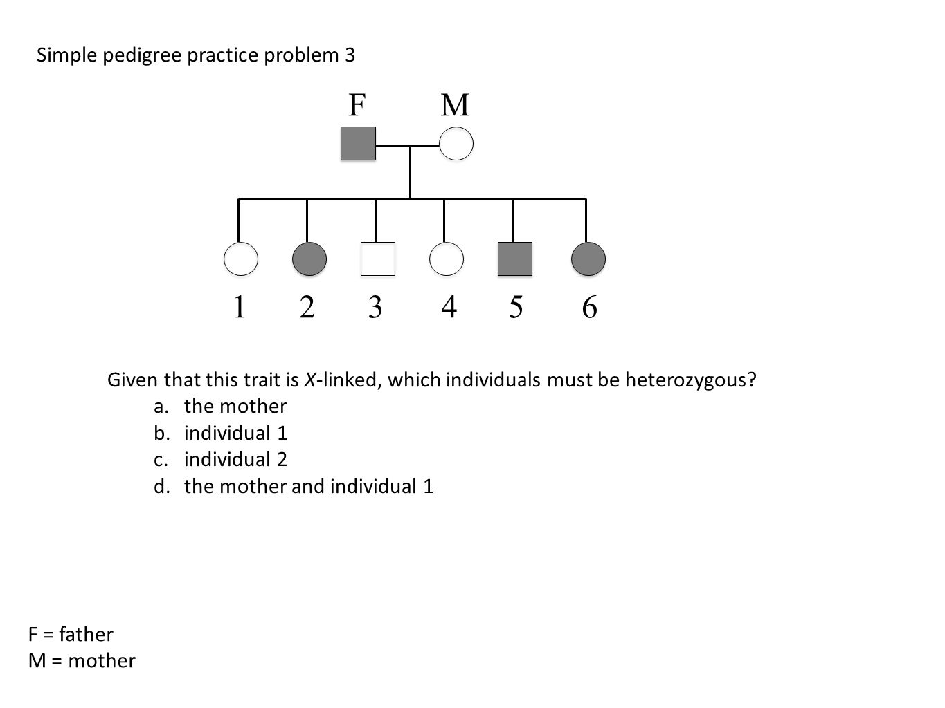 Worksheet Genetics Practice Problems Simple Worksheet