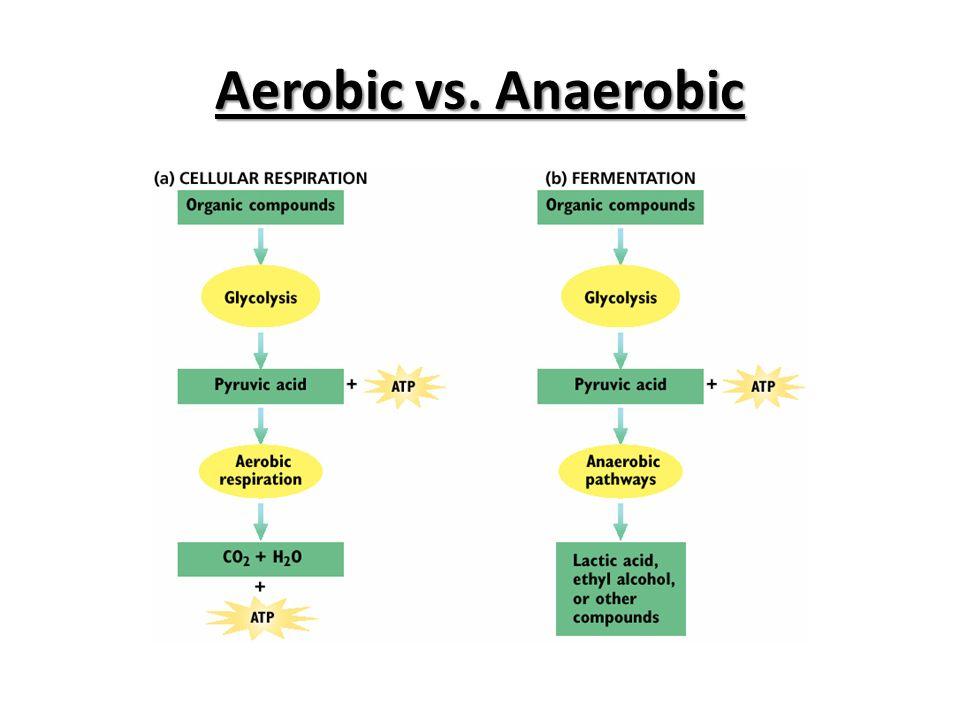 Aerobic Respiration Pathway