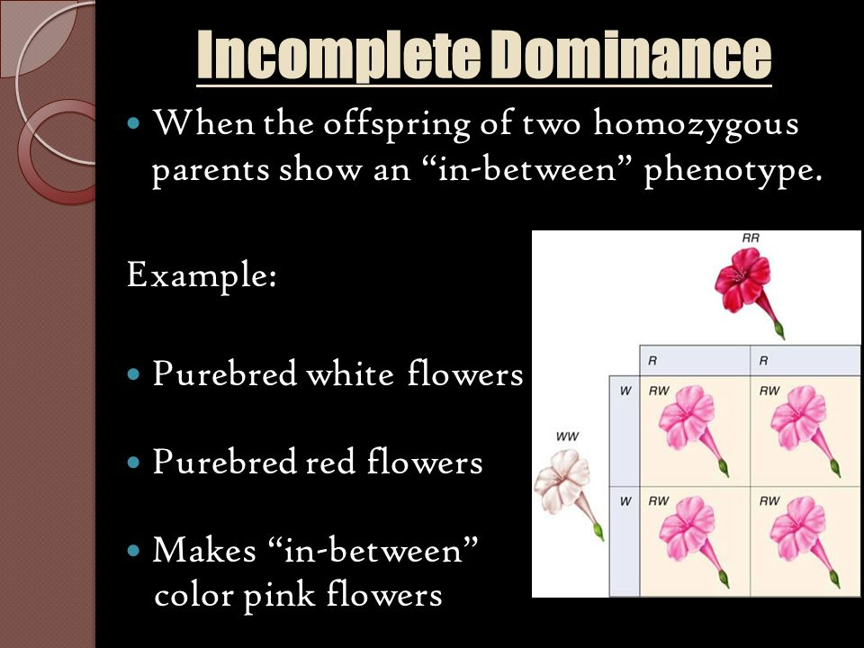 Dominant And Recessive Traits Eye Color And Hair