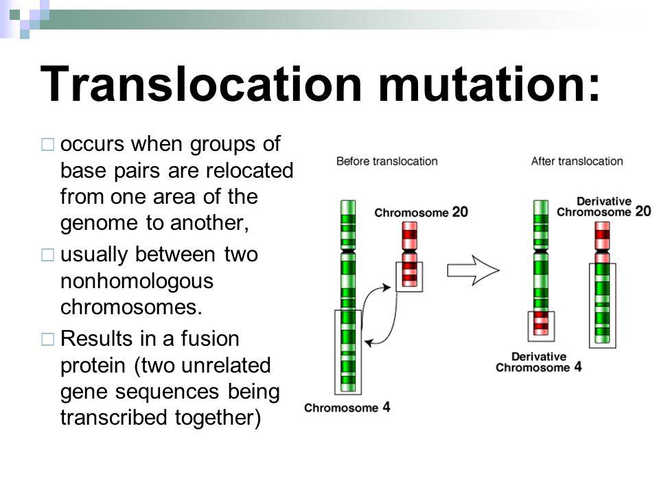 Point Mutation And Frameshift Mutation