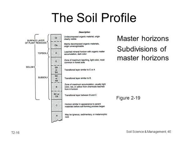 Soil Origin and Development - ppt video online download