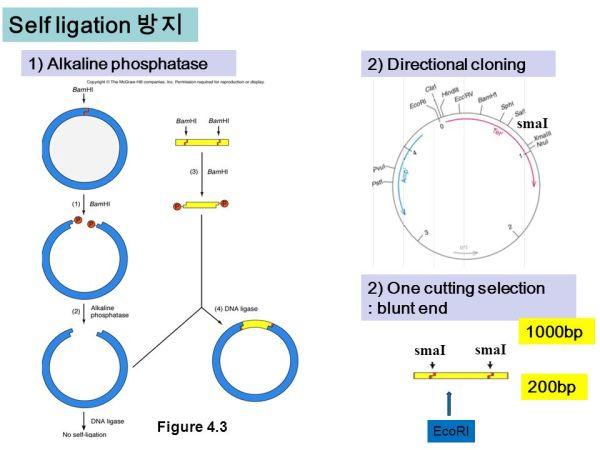 Molecular Biology Fourth Edition - ppt video online download