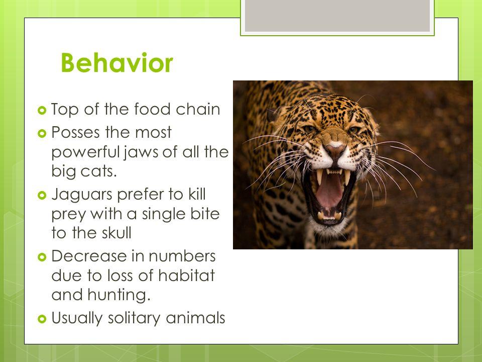 Behavior+Top+of+the+food+chain?resize=665%2C499 jaguar food chain diagram jaguar auto engine and parts diagram jaguar diagram at panicattacktreatment.co