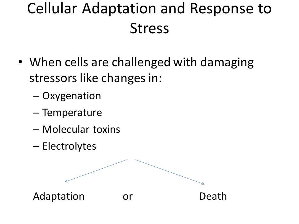 Cellular Adaptation Stress