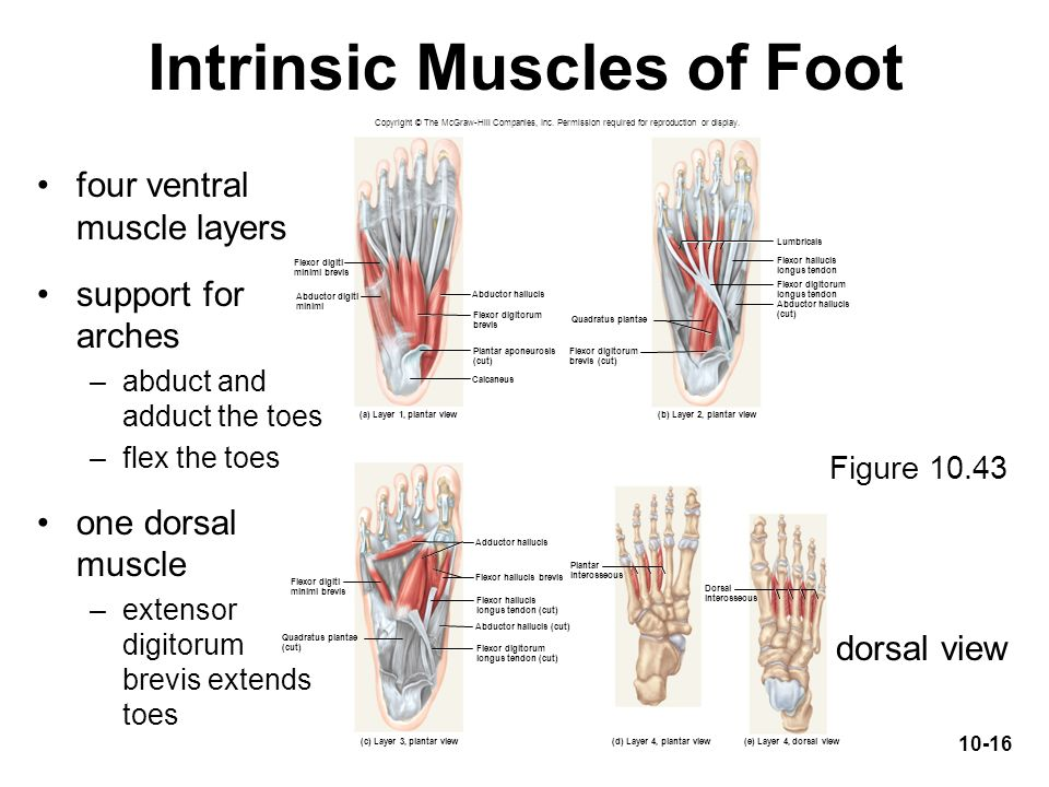 Nerves In Feet And Calf