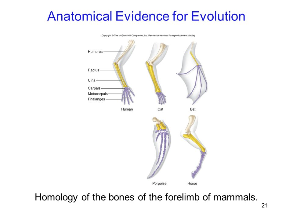 Function Of Whale Bones