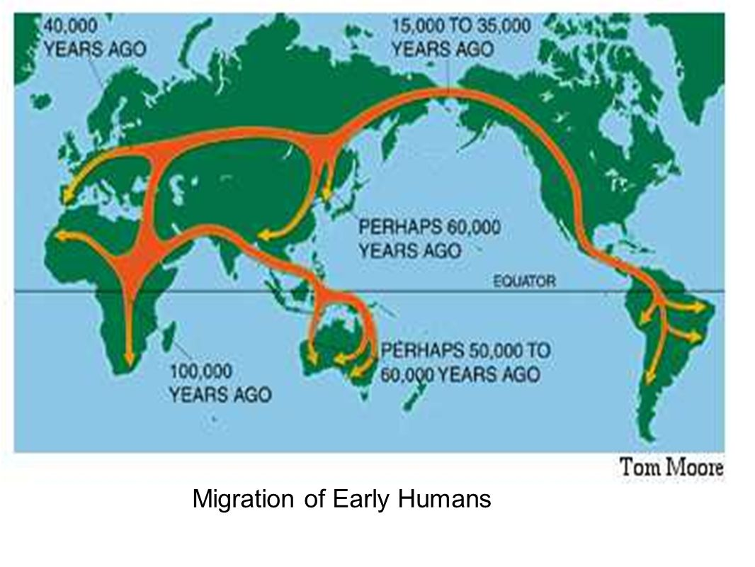 Early Man Hominids