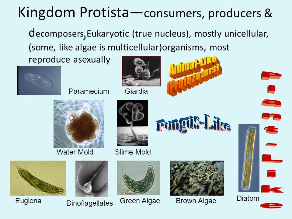 Image of: Vertebrates Unifying Principles Of Biology Kingdom Examples Organisms Animalia