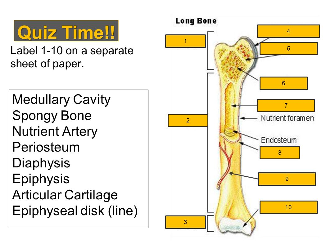 Bone Matrix Coloring Worksheet Answer Key