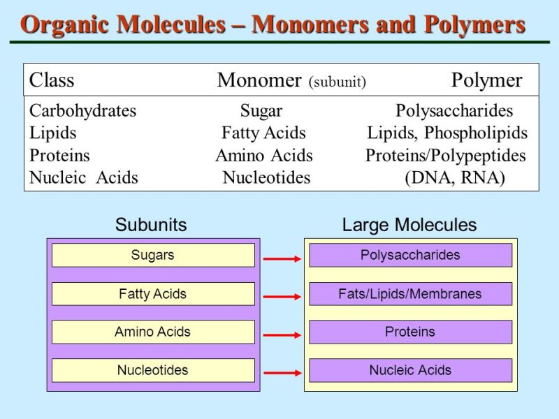 Compare The Chemical Structure And Functions Of Carbohydrates Lipids