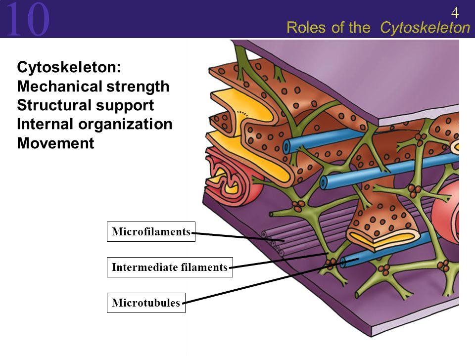 kaelliss – AP Biology