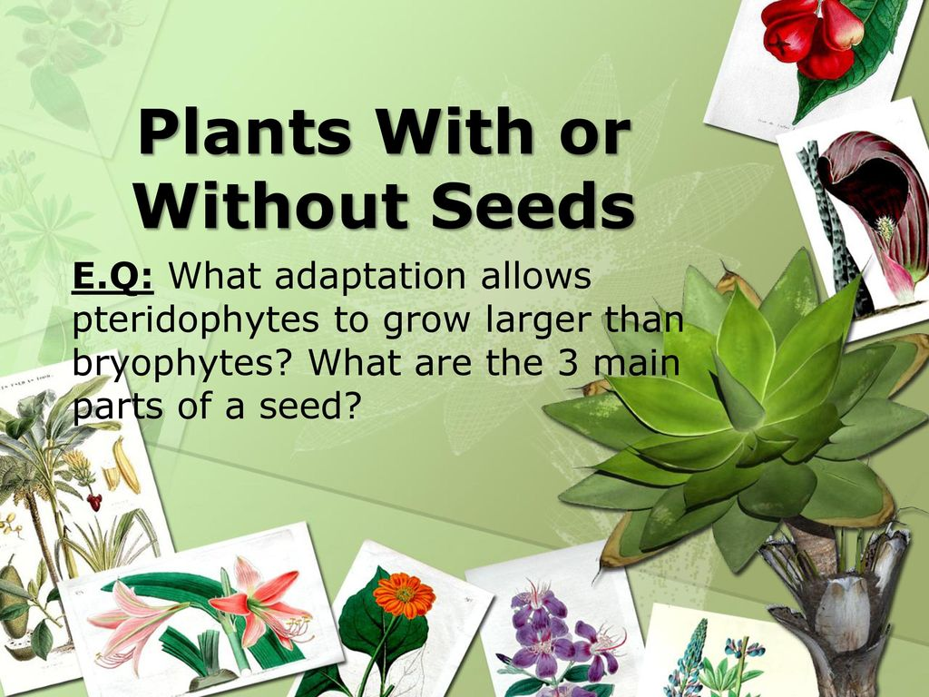 Plants With Or Without Seeds