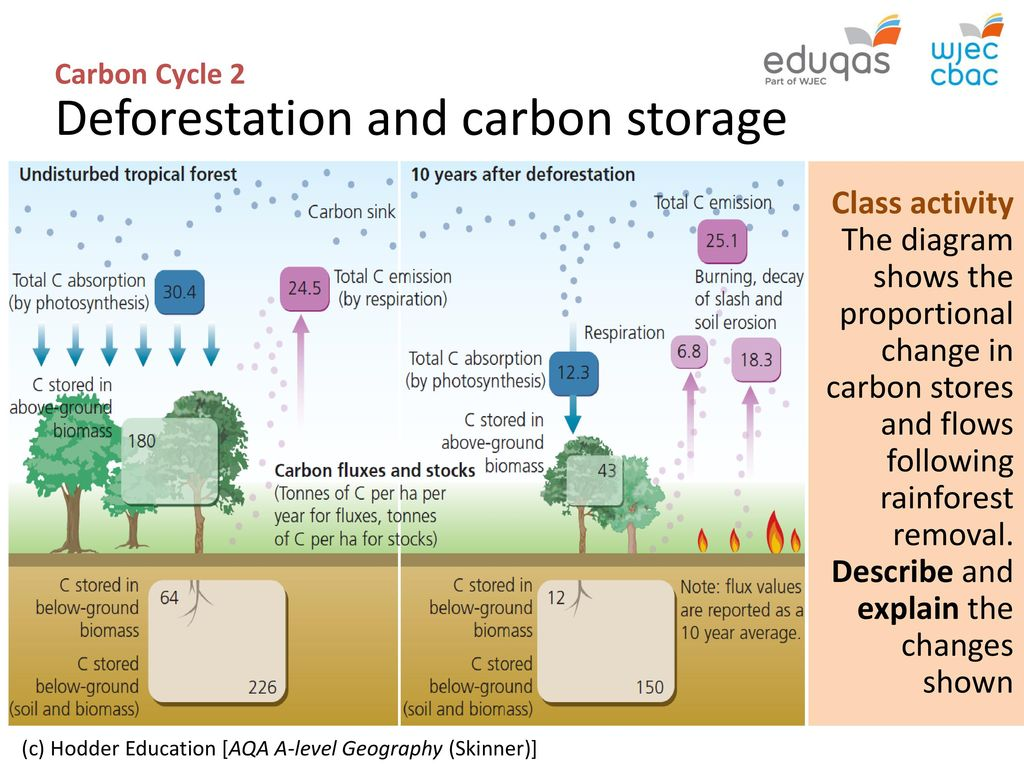 Carbon Cycle 2 Biome Storage