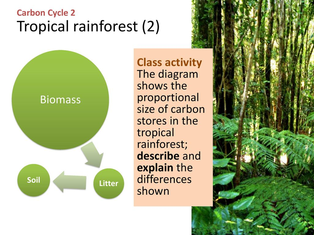 Questions About The Tropical Rainforest Biome What Are