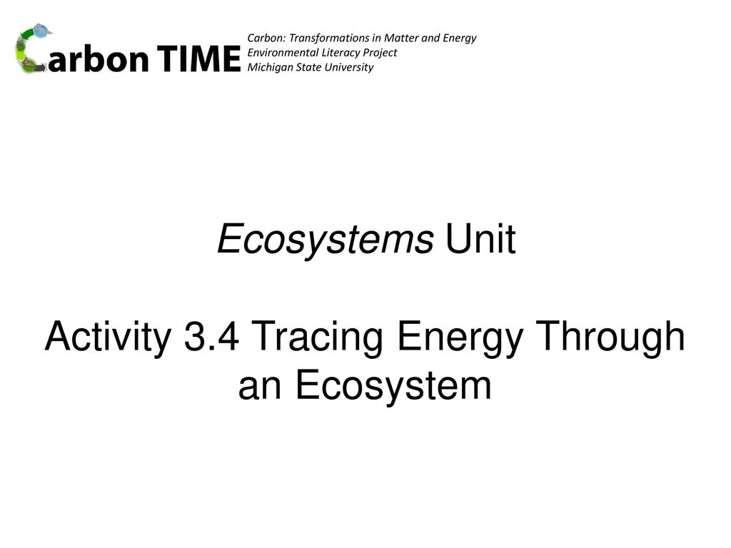 33 Energy Flow In Ecosystems Worksheet Answers